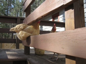 Clementine and Amandine, two TCA rescues.